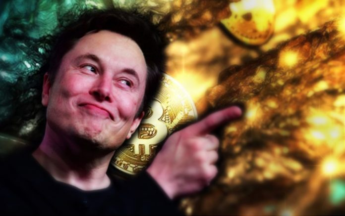 """""""You might as well have crypto"""" Elon Musk Responds to Peter Schiff in Gold Vs Bitcoin Debate"""
