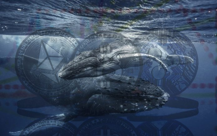 Whale Abruptly Moves 220,000,000 XRP – Here's Where the Crypto Is Going